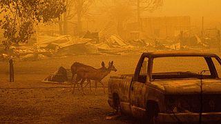 """США: Пожар """"Дикси"""" распространился на новые территории"""