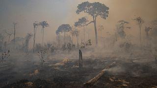 Brasil a braços com potenciais incêndios recorde