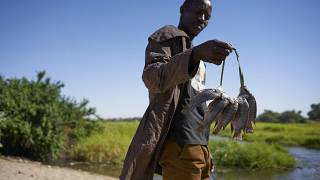 Depletion of fishing resources deepen row among locals in Cameroon, Chad