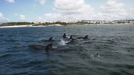 Dolphins back in Lisbon's Tagus River