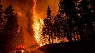 Flames leap from trees as the Dixie Fire jumps Highway 89 north of Greenville in Plumas County, Calif., on Tuesday, Aug. 3, 2021
