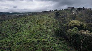 RDC : le pasteur et directeur de l'Institut de  protection de la nature suspendu