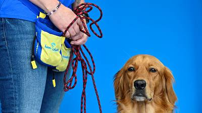 Pokaa, the golden retriever is pictured at La Roselière nursing home in France where she has proven adept at detecting COVID-19.
