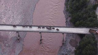 عبورقطيع مكون من 14 فيلًا بريًا، جسرا في مقاطعة يوننان بجنوب غرب الصين.
