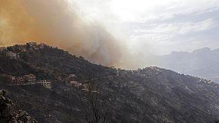 Viele Tote bei Waldbränden in Algerien