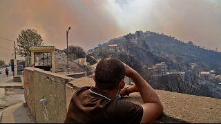 Cezayir'de orman yangınları