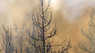 Internationale Helfer im Einsatz gegen Waldbrände in Griechenland