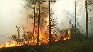 Los fuegos de Siberia queman una superficie similar a la de Países Bajos