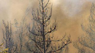 حريق في غابة بقرية أفجاريا في جزيرة إيفيا الواقعة على بعدِ نحو 184 كيلومتراً شمال العاصمة أثينا