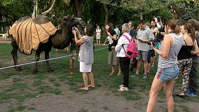 Local Hungarian activists brought camels to a climate protest in Budapest on August 11, 2021.