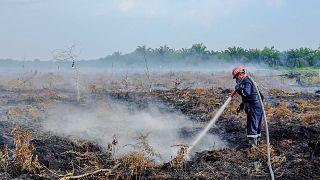 2021'de orman yangınlarının yok ettiği alanlar