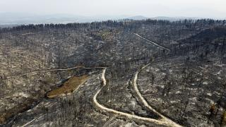 A burnt forest in Agia Anna village on Evia island, north of Athens, Greece, Aug. 11, 2021.