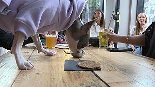 Un bar londonien qui accueille les chiens aussi bien que leurs maîtres - Photo extraite d'une vidéo AFP