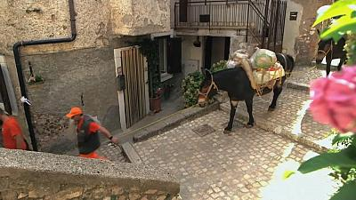 One of the three mules collecting garbage in the historic town of Artena.