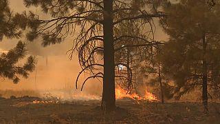 Καλιφόρνια: Σπίτια και τεράστιες δασικές εκτάστεις κατακαίει η φωτιά Ντίξι