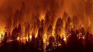 """Лесной пожар """"Дикси"""""""