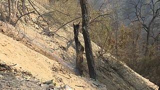 Le nord de l'Algérie a été ravagé par des incendies.