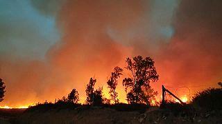 200 hectares de forêt ont déjà été ravagés par les flammes dans le nord du Maroc
