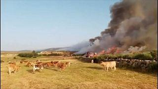 Der Buschbrand in Ávila in Zentralspanien ist nur teilweise unter Kontrolle