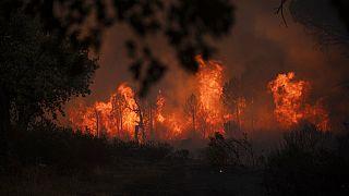 L'incendio vicino Le Luc nel sud della Francia