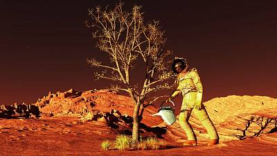 What would Mars look like if we grew plants on its surface?
