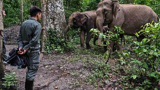 محمية طبيعية للأفيال، مقاطعة يونان جنوب غرب الصين، 20 يوليو 2021