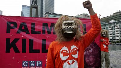 Activists want the ban on palm oil permits to be extended