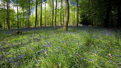 Forests in England are being rewilded and it's bringing the local community back to life.