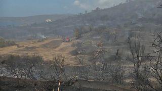 Weiter lodern Waldbrände in Griechenland