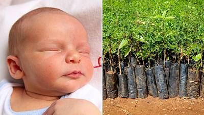 Every time a new child arrives in Wales a tree gets planted in Mbale, Uganda.
