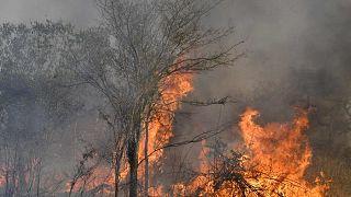 منظر لحريق غابة في سان ماتياس، منطقة تشيكيتانيا، مقاطعة سانتا كروز، بوليفيا، 20 أغسطس 2021