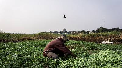 La RDC projette des exportations agricoles vers l'Occident et la Chine