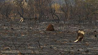 L'incendie a ravagé plus de 2 000 hectares.