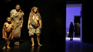 مجسم إنسال نياندرتال في متحف العلوم والأنتروبولوجيا في مدينة ليون الفرنسية. 2014/12/18