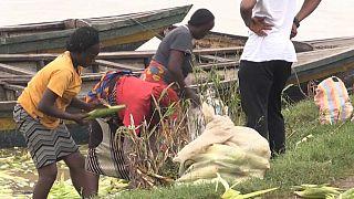 Nigéria : l'insécurité menace la production alimentaire