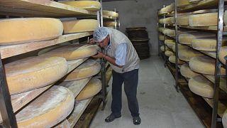 Kars Gravyer Peynir Üretimi