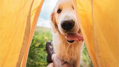 Planning a holiday with your dog? Here are our recommendations