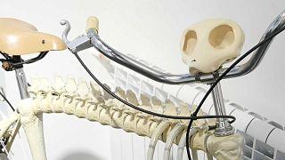 Не транспорт, а арт-объект: в Санкт-Петербурге проходит выставка велосипедов