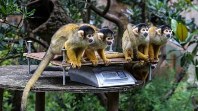 """London Zoo held its annual """"weigh-in"""" of its animals on August 26."""