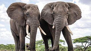 Kenya : le braconnage en baisse selon un premier recensement des animaux