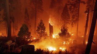 اندلاع الحرائق في غابة إلدورادو بولاية كاليفورنيا الأمريكية