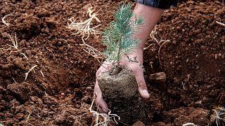Ağaçlandırma / ARŞİV