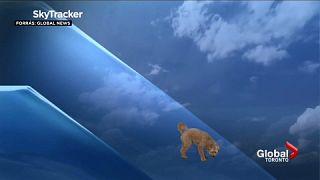Storm, azaz Vihar a kutya a stúdióban