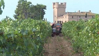 زراعة العنب وصناعة النبيذ في إقليم قطالونيا