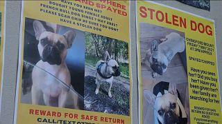 Regno Unito, boom di sparizioni di cani: il governo valuta il reato di rapimento