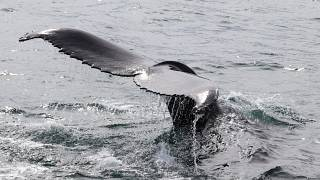 Нервничает ли кит, если за ним следят?