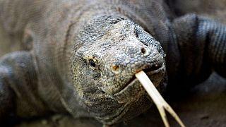 نزدیک به ۳۰ درصد گونههای کره زمین در معرض خطر هستند