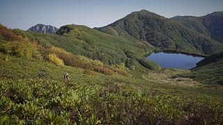 Τα τροπικά δάση  και οι υγρότοποι της Γεωργίας