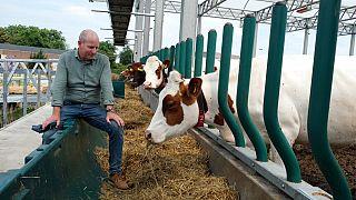 Hollanda'nın liman şehri Rotterdam'da yüzen bir hayvan çiftliği.