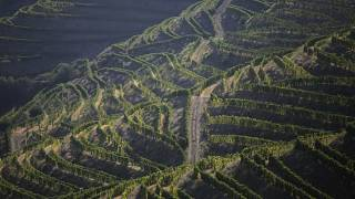 In this photo taken Sept. 12, 2018, the morning sun shines over rows of vines on the slopes above the Douro river near Ervedosa do Douro, northern Portugal.